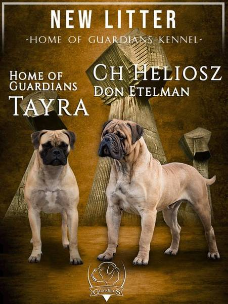 "Odgajivačnica bullmastiff-a ""Home of Guardians"""
