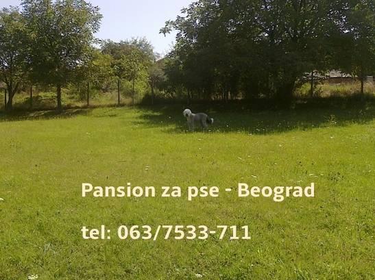 Pansion za pse Beograd - Jajinci