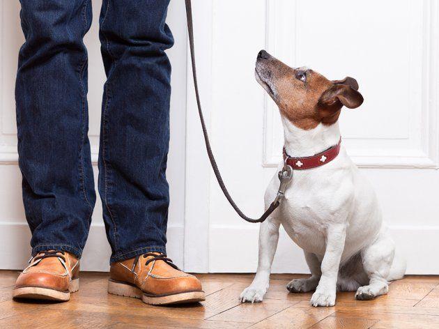 Šetač pasa Vama na usluzi u Nišu
